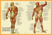 Poster-Spieren