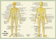 Poster-Skelet